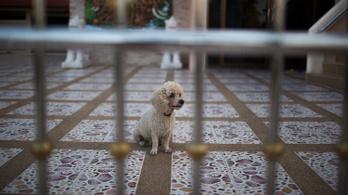 A kutyahús evése nem jó szokás, jöttek rá Vietnámban