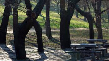 Ismeretlen tettesek ellen nyomoz a rendőrség a tabáni szexuális erőszak miatt