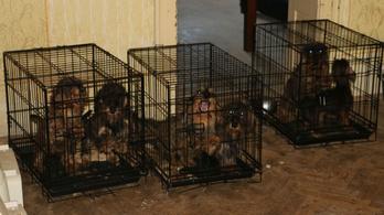 Saját vizeletükben feküdtek a tacskók a barcsi kutyatenyésztőnél
