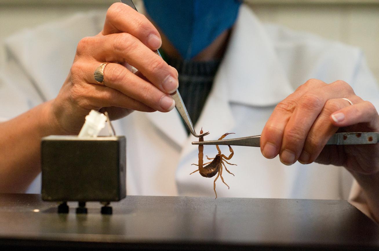 skorpió méreg