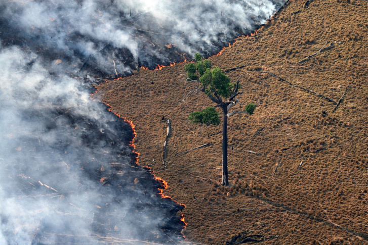 Pasture in flames at one of the deforested region of the Amazon