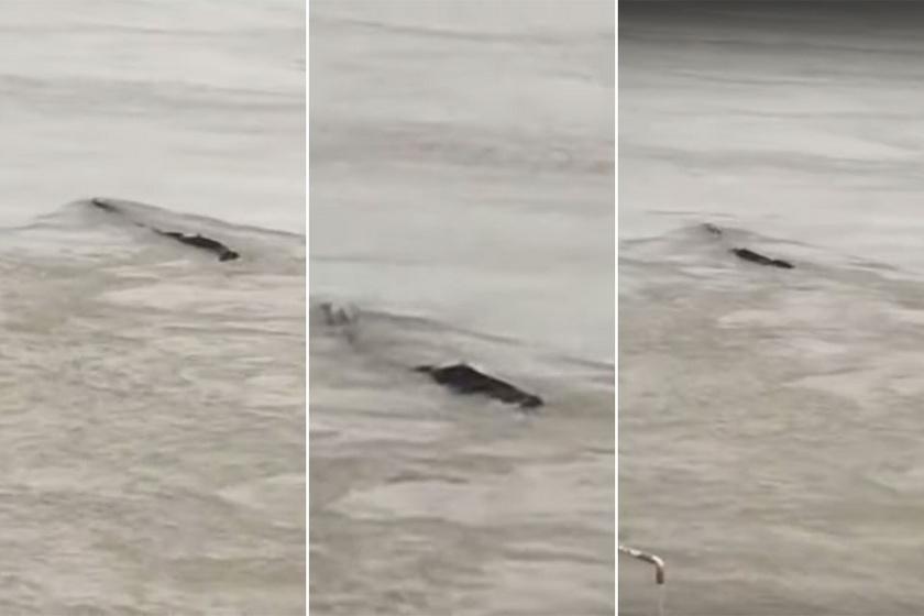 Nagyon bizarr dolog úszott a folyóban: felborzolta a kedélyeket a videó