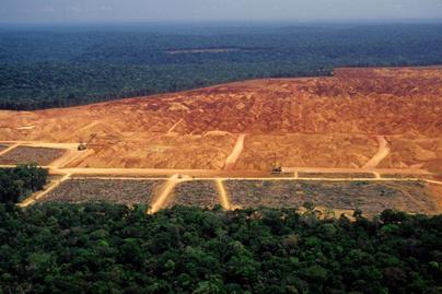 amazonas-erdoirtas