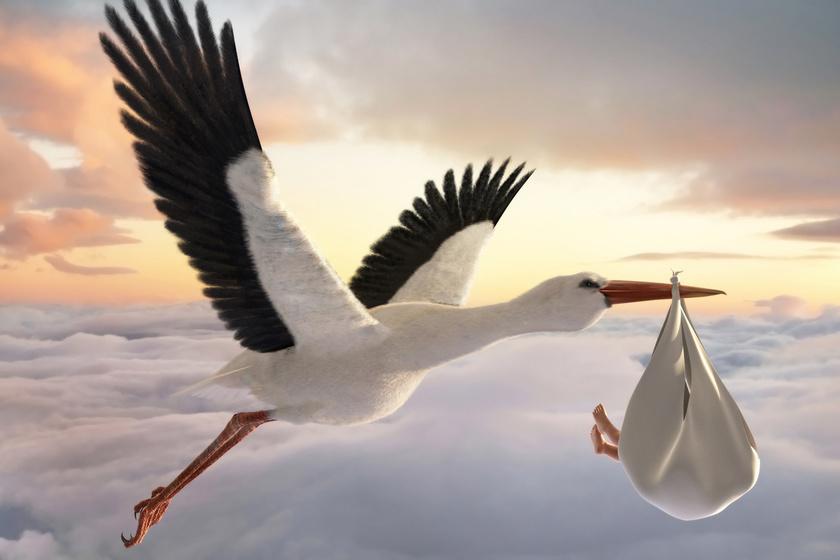 Ezért hozza a gólya a csecsemőket: érdekes a klasszikus mese eredete