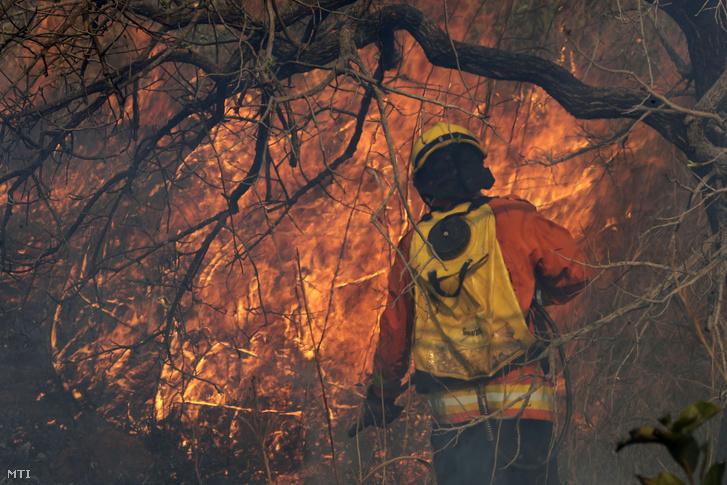 Tûzoltó locsolja a lángoló növényzetet a brazil szavannán a Brazíliavárostól mintegy 20 kilométerre délkeletre levõ Jardim Mangueiral közelében 2019. szeptember 17-én.