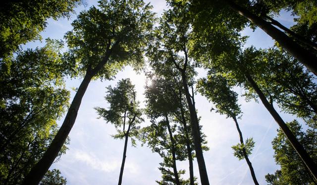 ismerd meg a fák az óvodában