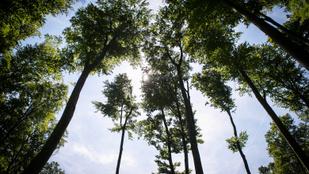 Mit jelent a gyakorlatban a fenntartható erdőgazdálkodás?