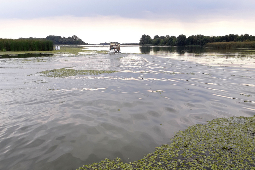 A Tisza-tó felfedezésének legegyszerűbb és legélvezetesebb módja, ha vízre szállsz. Hajóval, csónakkal is könnyen közlekedhetsz.