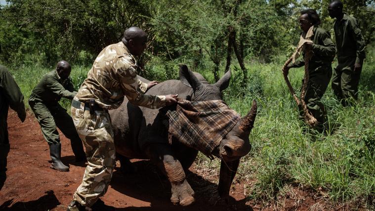 Hat éve nem öltek meg orrszarvút egy kenyai rezervátumban