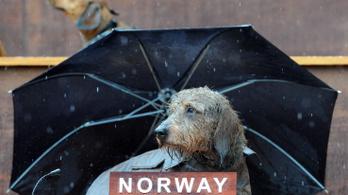 Ismeretlen kór tizedeli a kutyaállományt Norvégiában