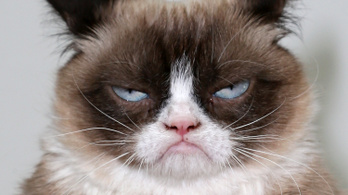 A macskák mégsem gyűlölik annyira az embert (talán)
