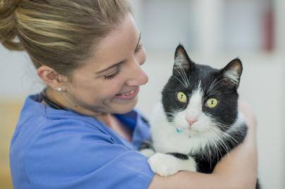 Macska az állatorvosnál