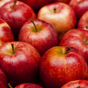 Melyik almafajta a savanykás és melyik az édes? Sütibe is, kompóthoz is más kell