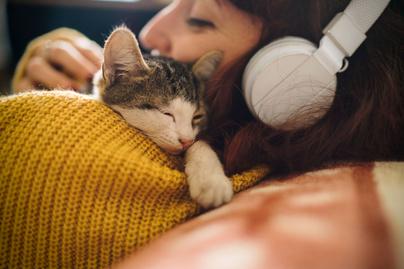 cica-alszik