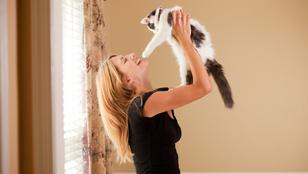 Te sem tudod, hogy kell helyesen tartani egy macskát? Megmutatjuk!