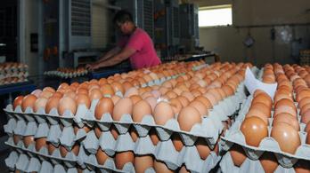 Kiakadtak a tojástermelők a boltok tojásakcióira és a gyors technológiai változásra