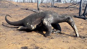 Több mint kétmillió állat veszett oda a bolíviai erdőtüzekben
