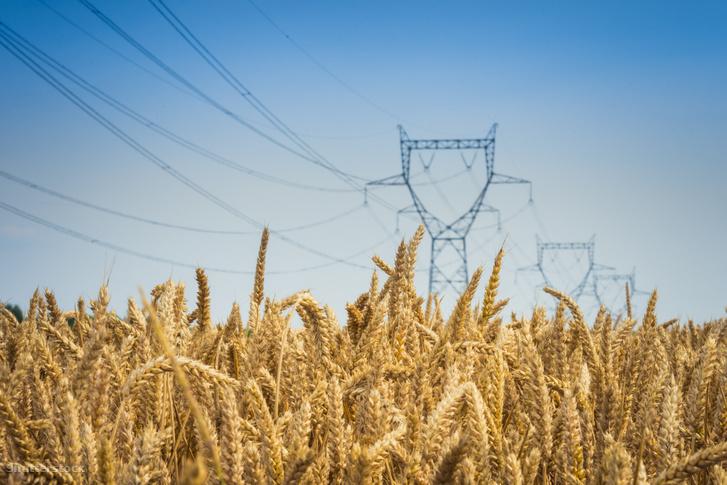 Korbaeli, az Egyesült királysából származó beszámoló szerint amikor villanyvezetékeket feszítettek ki a búzaföld fölé, 24 százalékkal lett gazdagabb az aratás