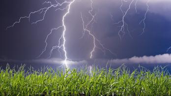 Jobban nő-e a saláta elektromos mezőben?