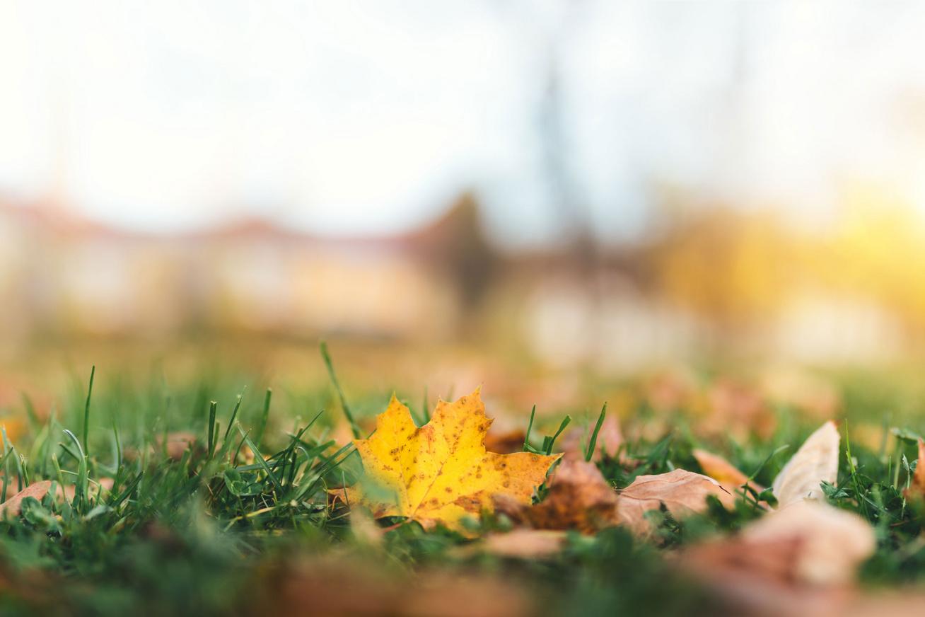 oszi-levelek