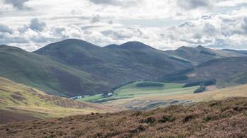 Fajkihalás lehet a vége a klímaváltozás elleni faültetésnek Skóciában