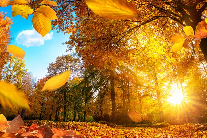 levelek-hullanak