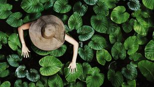 10+1 ok, hogy minél több növénnyel vedd körül magad
