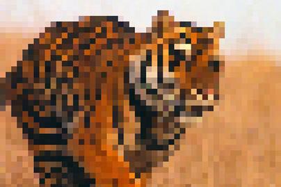 tigris-lead