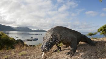 Százszorosára emelkedik a belépő ára a Komodo-szigetre