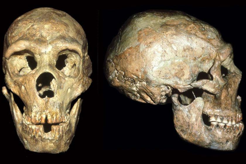 Shanidar 1 koponyája két nézőpontból.