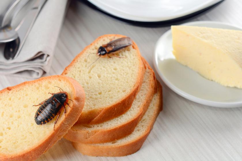 Nem a moly az egyetlen kártevő a konyhában: 8 bogár, amiről keveset hallani, de annál bosszantóbbak, így ismerd fel őket