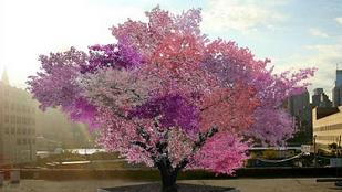 Így jött létre a fa, ami 40 különféle gyümölcsöt terem
