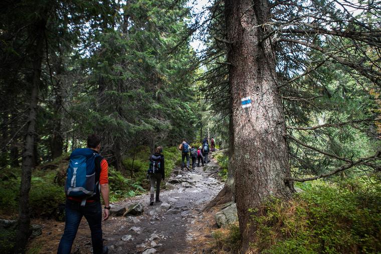 A Kapor-csúcsra ezen a rövidebb, fenyvesben vezető úton haladunk tovább, szintén a kék sávos jelzésen