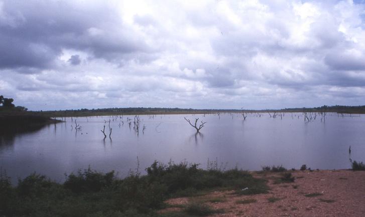 A Volta-tó vizéből kiálló fák látképe.