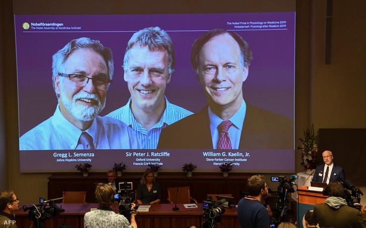 Karolinska Intézet, a svédországi Stockholmban, 2019. október 7-én. - William Kaelin és Gregg Semenza az Egyesült Államokból, valamint Peter Ratcliffe Nagy-Britanniából nyeri a 2019. évi Nobel-egészségügyi díjat.