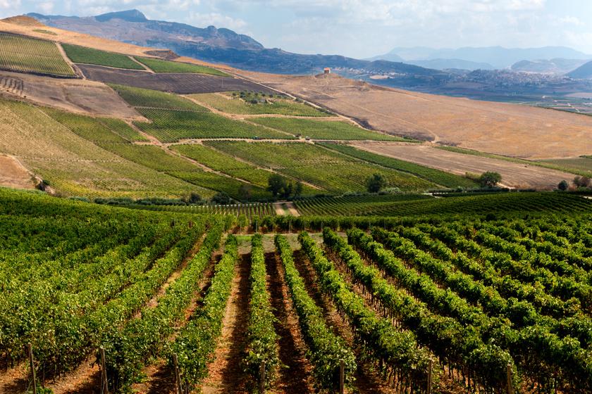 Sambuca vidéke híres szőlőtermesztéséről, gyönyörűen sorakoznak egymás mellett a szőlőtőkék. Olyan emberek vettek birtokot az apró városban, akik értékelni tudják a természet nyújtotta utánozhatatlan panorámát.