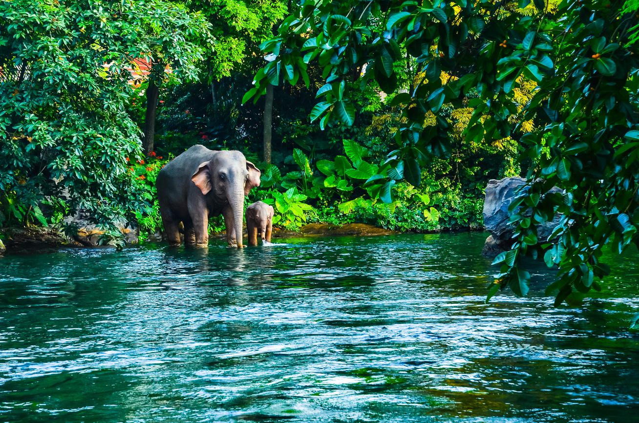 Thaiföld elefánt halál