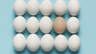 Itt a nagy tojásnapi kvíz: kitalálod, melyik állat tojta?