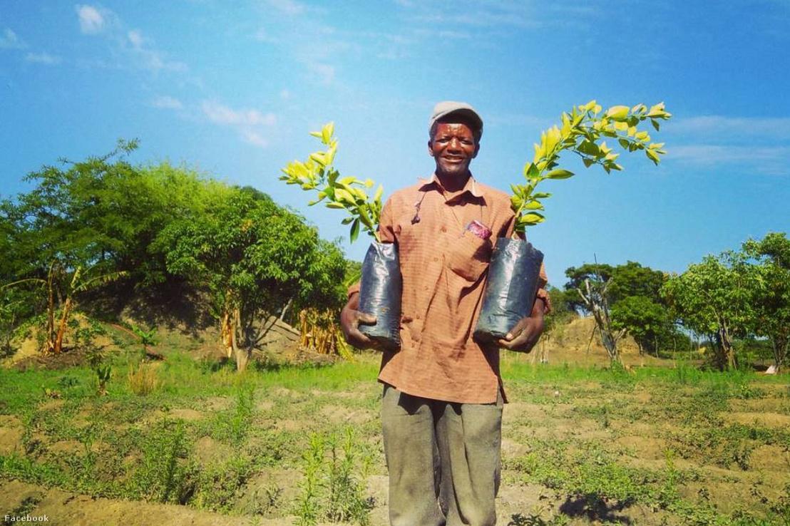 Zambiai farmer a Weforest szervezet projektjének keretében fát ültet