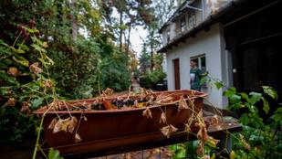 Titokzatos drónról savazták szét a fákat