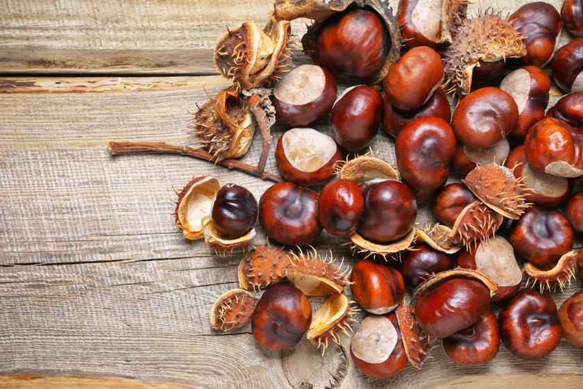 Nem ehető, mégis gyógyít - A vadgesztenye áldásos hatásai