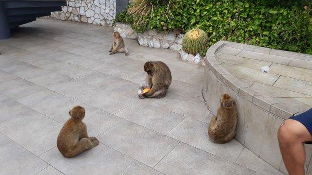 Andalúz körút - Gibraltár, a majmok sziklája
