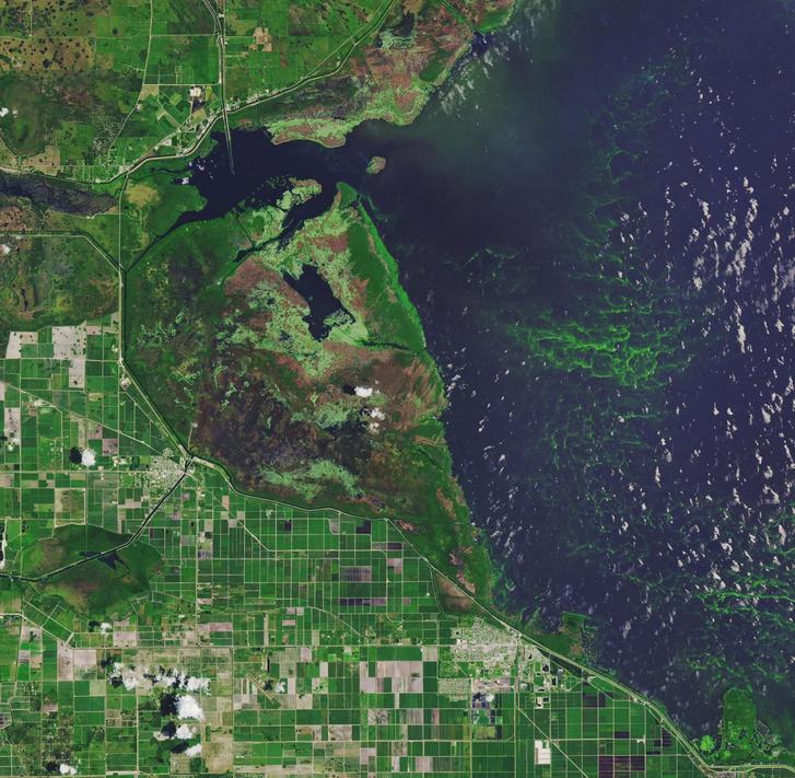 A floridai Okeechobee-tó mérges algásodása miatt 2016 és 2018-ban is vészhelyzetet hirdettek