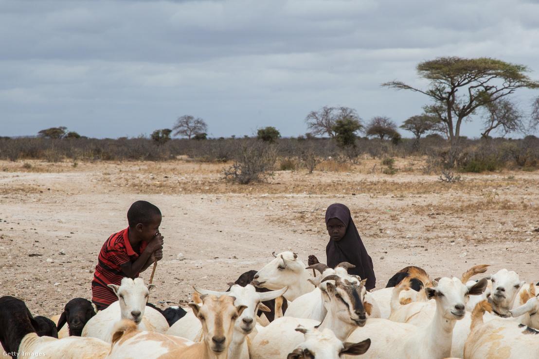 Kenyai pásztor gyerekek