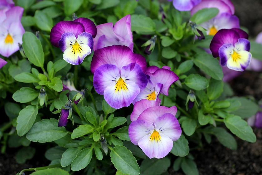 oszi kerteszeti napok