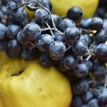 Elképesztő ízkombináció: otelló szőlő és birsalma egy lekvárban