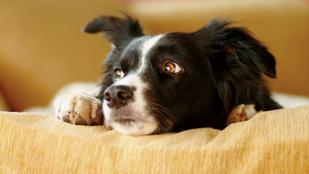 Így hat a kutyádra, ha feszült vagy