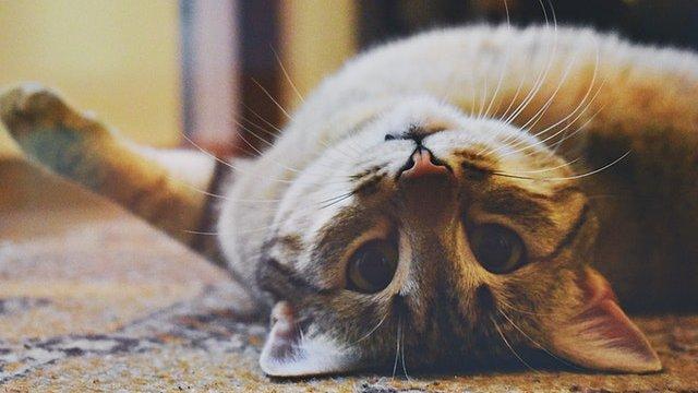 Ez a 6 kérdés érdekel titeket a cicátokról legjobban