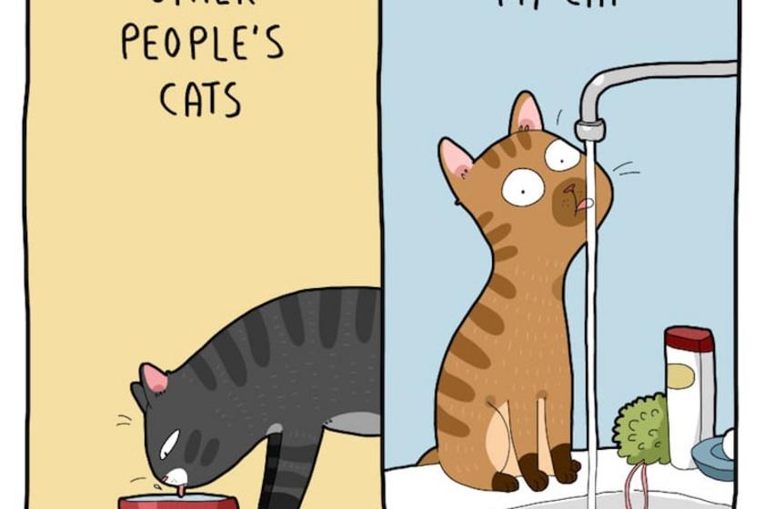 Mások macskája - Az én macskám.