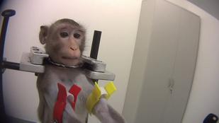 A német hatóságok vizsgálják az állatkínzó hamburgi labort